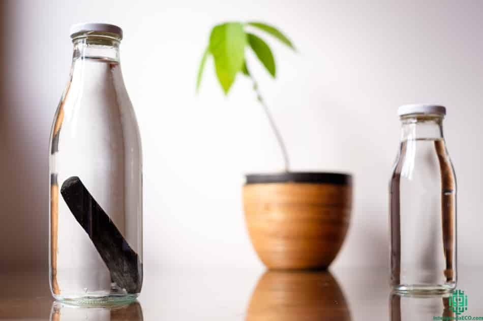 Botellas con filtro binchotan y una planta de aguacate.