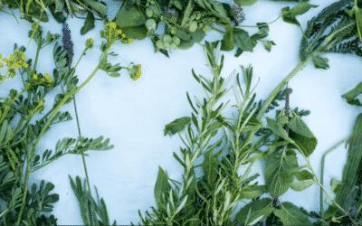 ¿Por qué deberían interesarte las plantas silvestres?