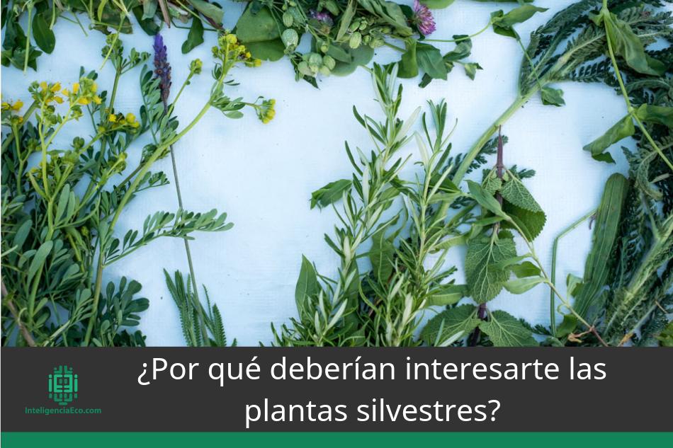 Por qué deberían interesarte las plantas silvestres
