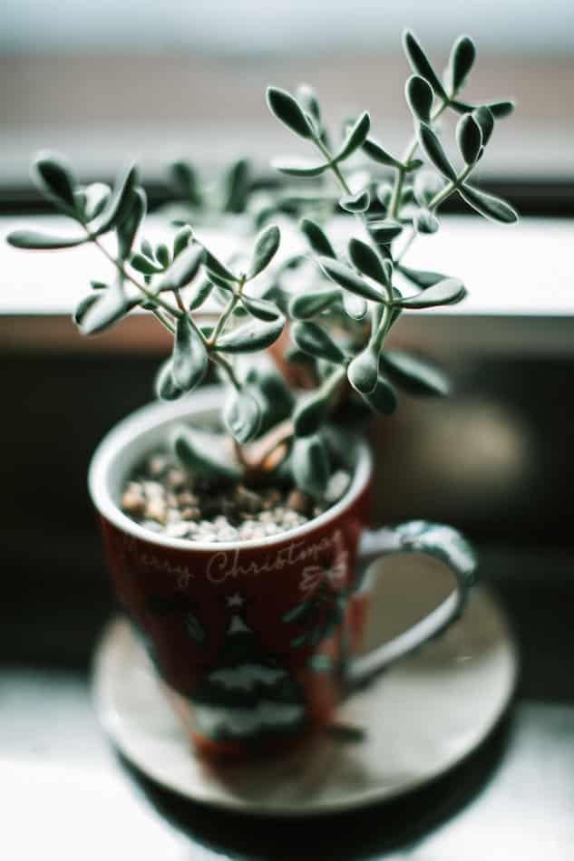 Navidades Zero Waste reutilizando una taza como jarrón decorativo.
