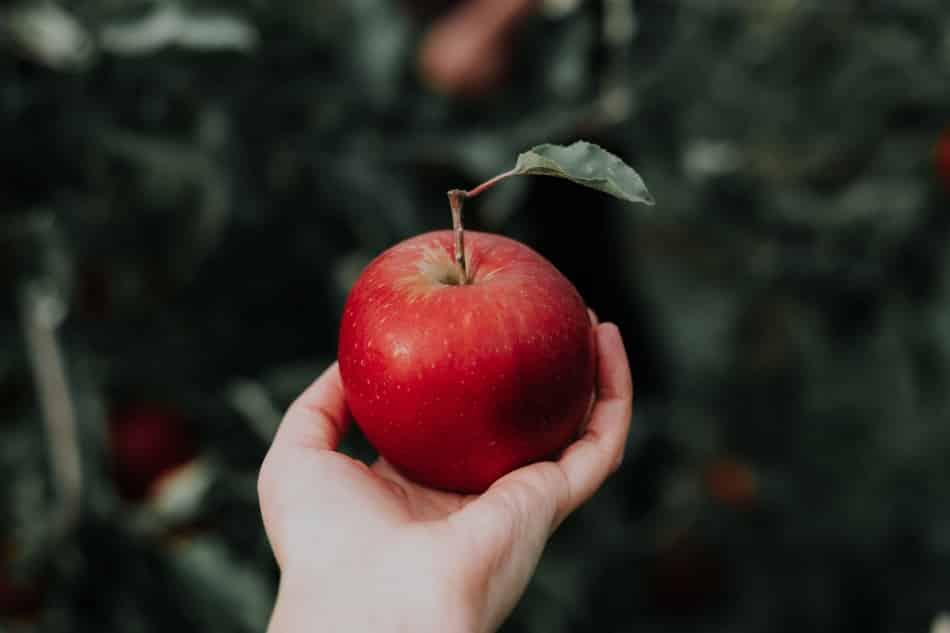 Alimentación esencial basada en frutas y verduras.