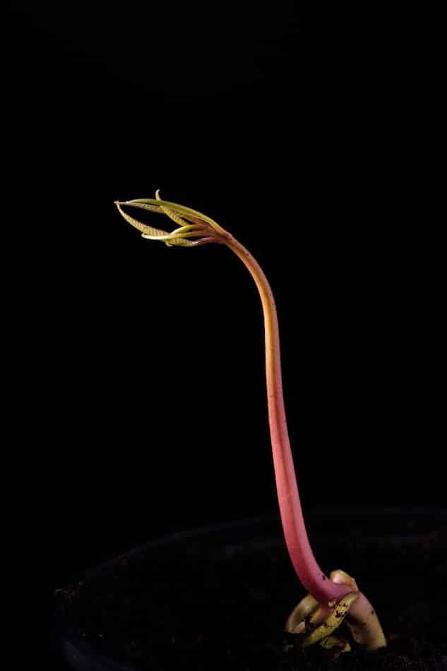 Germinar tus propias semillas te acerca a la naturaleza y te permite llevar una vida más sostenible.